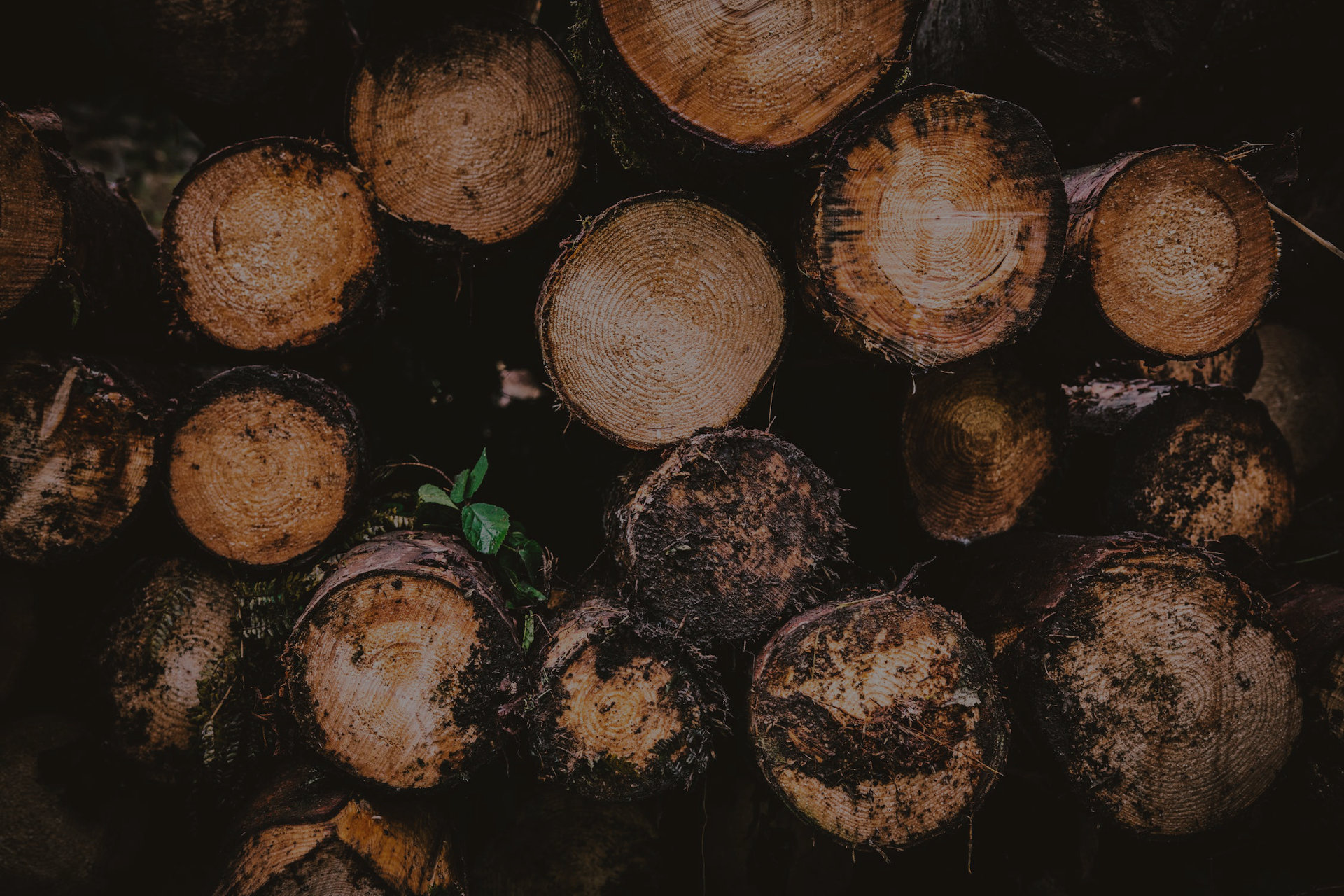 01-wood